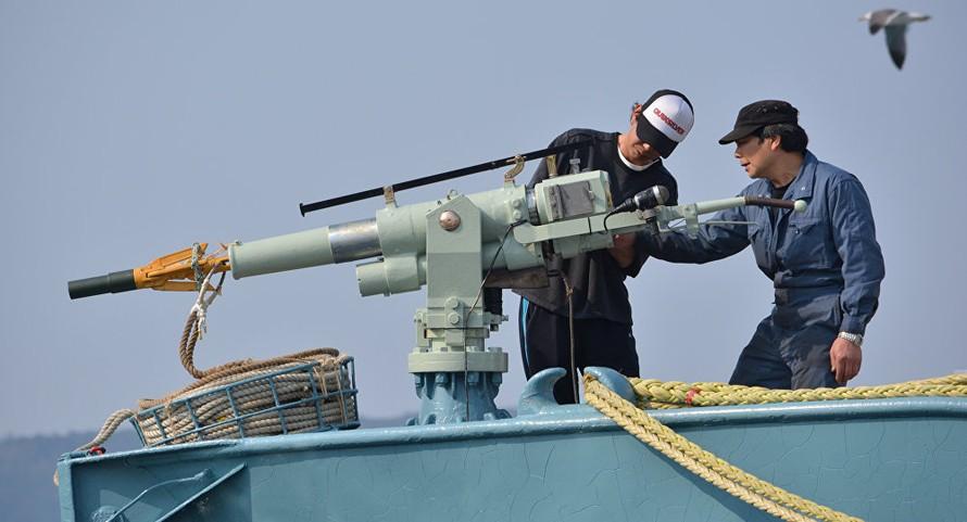 Ngư dân Nhật Bản sử dụng súng phóng lao để săn bắt cá voi. Ảnh: Sputnik