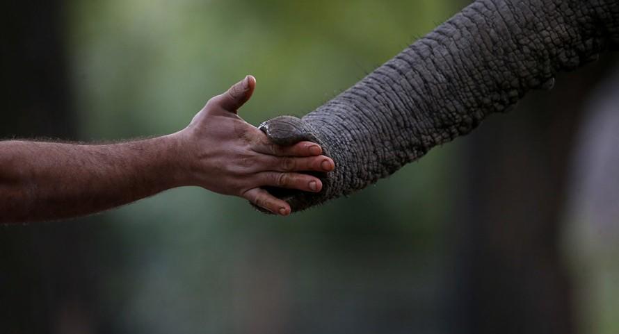 Tòa án Ấn Độ ra lệnh phá hủy bức tường cản trở loài voi di cư