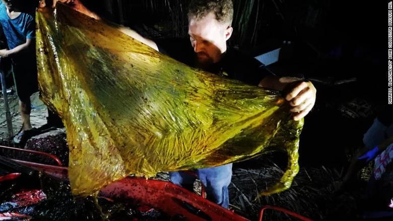Darrell Blatchley, tìm thấy khoảng 40 kg bao tải gạo, túi tạp hóa,...trong dạ dày của con cá voi. Ảnh: CNN