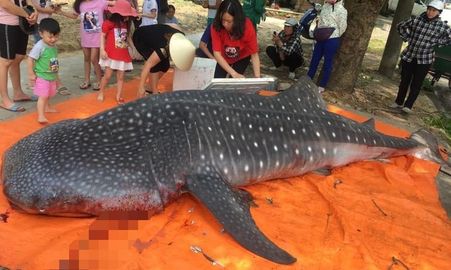 Con cá bị ngư dân xẻ thịt bán. Ảnh: VTC News
