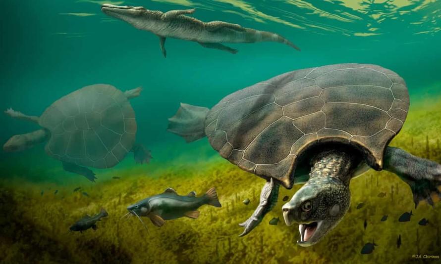 Phát hiện hóa thạch mai rùa cổ đại to bằng ô tô