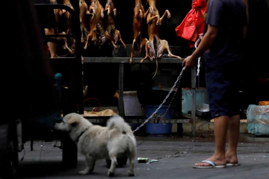 Trung Quốc loại bỏ chó khỏi danh mục động vật chăn nuôi