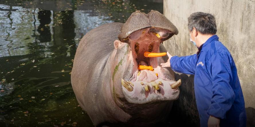 Sở thú Trung Quốc chuẩn bị cho thời kỳ hậu đại dịch