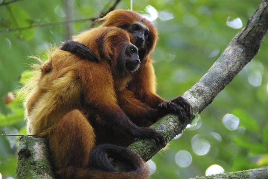 Dịch COVID-19 đe dọa hoạt động bảo tồn động vật quý hiếm