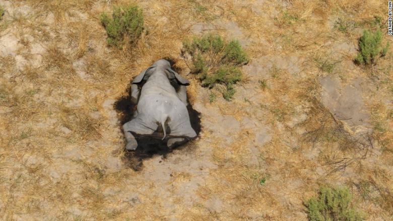 Botswana điều tra hiện tượng voi chết hàng loạt