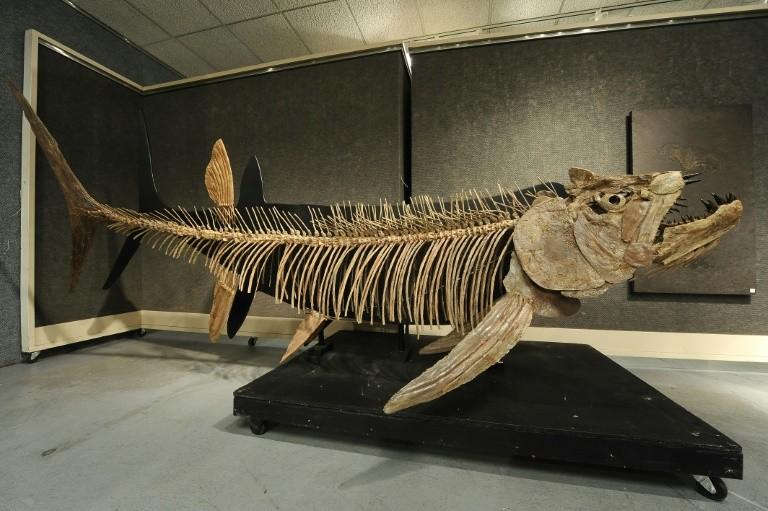 Phát hiện hóa thạch cá khổng lồ tại Argentina