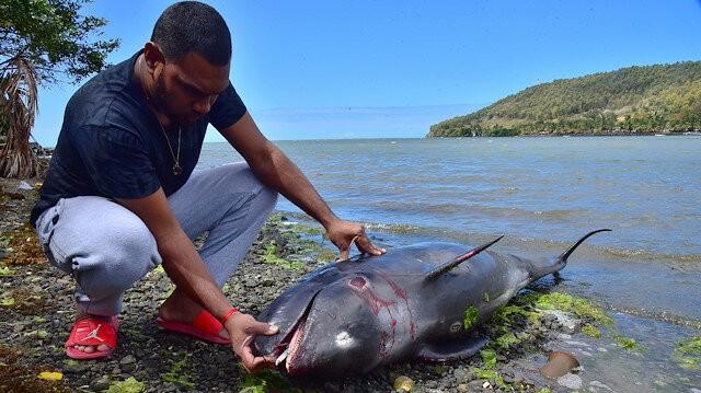 Ngư dân Mauritius nỗ lực cứu cá heo sau sự cố tràn dầu