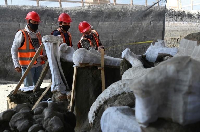Nghĩa địa voi ma mút được khai quật tại sân bay của Mexico
