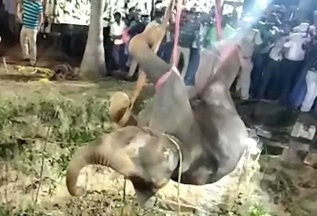 12 tiếng giải cứu voi mắc kẹt dưới giếng