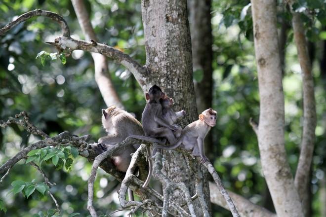 Đàn khỉ sinh sống trong Tòa thánh Cao đài tỉnh Tây Ninh. Ảnh: Thanh Niên
