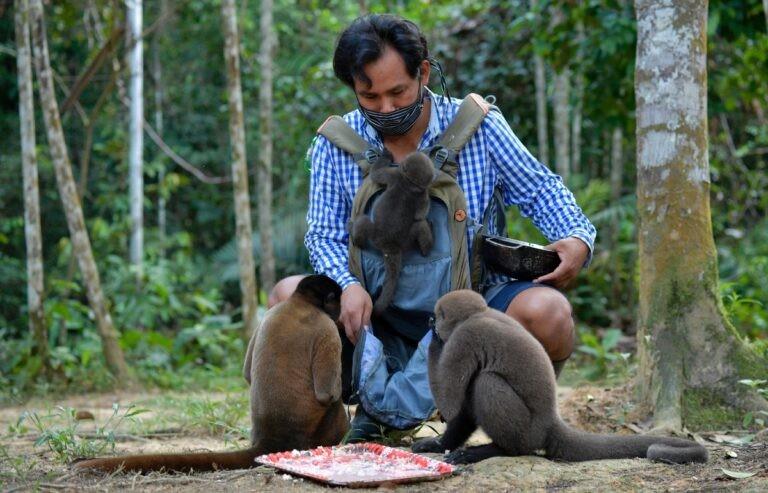 Khu bảo tồn khỉ mồ côi trong rừng Amazon