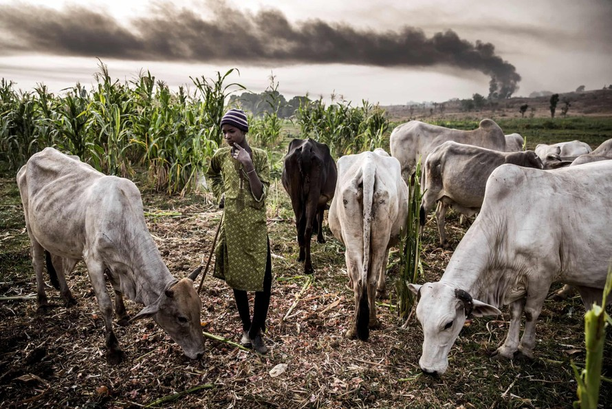 Cuộc khủng hoảng chăn nuôi ở Nigeria