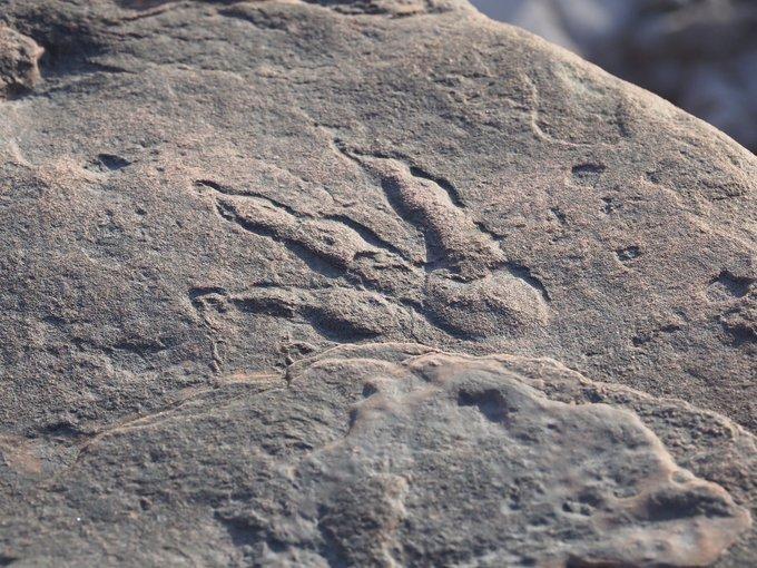 Bé gái 4 tuổi phát hiện dấu chân khủng long nguyên vẹn