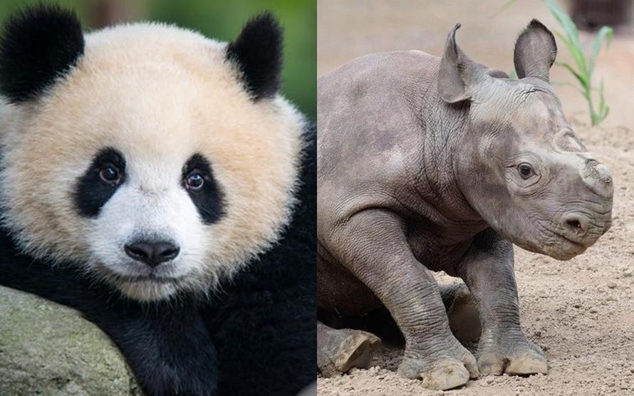 Trung Quốc xác định 44 loài động vật dễ mắc COVID-19
