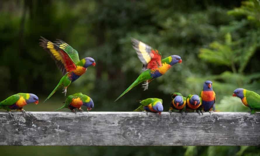 Thế giới hiện có 50 tỷ cá thể chim