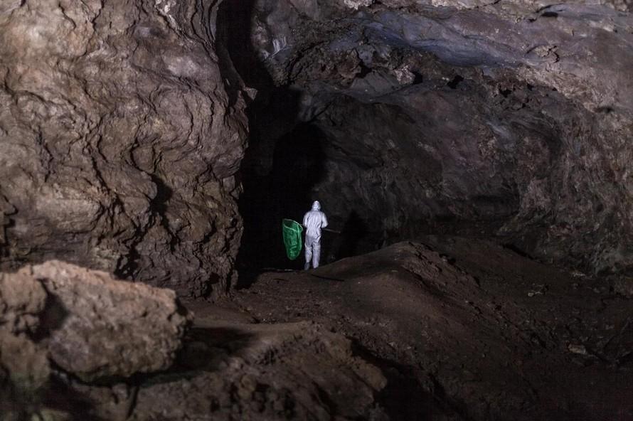 Mỏ đồng Mặc Giang - mắt xích quan trọng về nguồn gốc COVID-19