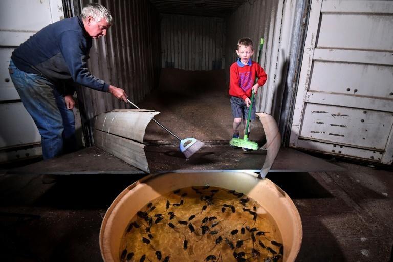 Ông Col Tink dùng chổi để quét chuột vào một bồn nước. Ảnh: AFP