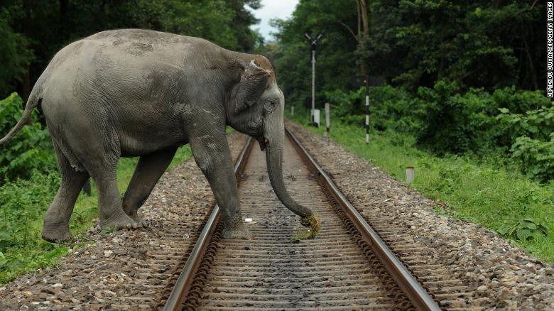 Ấn Độ tìm giải pháp cho mâu thuẫn giữa người và voi