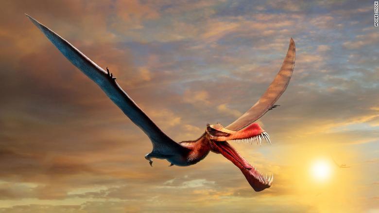 Loài khủng long từng thống trị bầu trời Australia