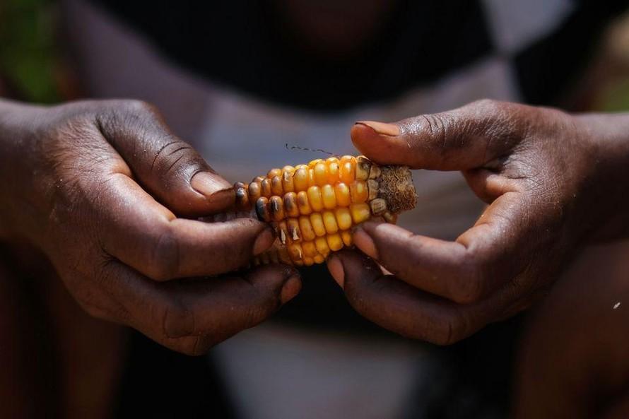 Sau thảm họa tự nhiên, người dân Haiti đối mặt với nạn đói