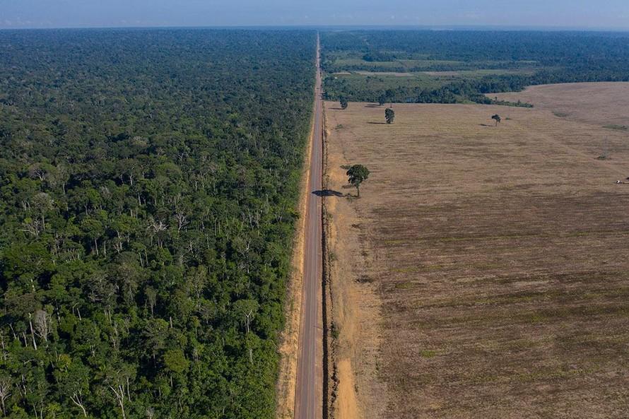 Nửa số loài cây hoang dã trên thế giới có nguy cơ tuyệt chủng