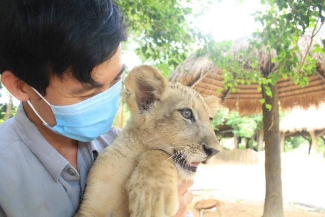 24 giờ của 'bố hổ, mẹ sư tử' ngoài đời tại Vinpearl Safari
