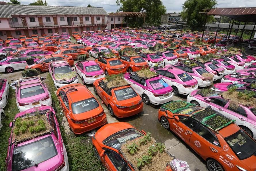 Tài xế taxi Thái Lan làm vườn mini trên nóc xe