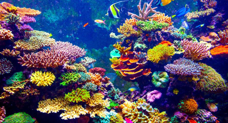 14% rạn san hô trên thế giới biến mất trong thập kỷ qua