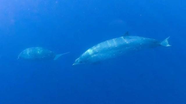 Lần đầu tiên phát hiện ra một loài cá voi hoàn toàn mới
