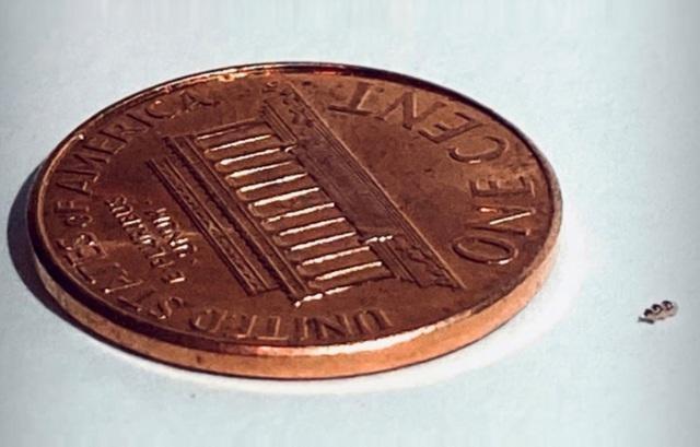 Một robot tí hon của Bionaut đặt cạnh một đồng xu.