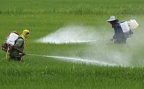 1/3 diện tích canh tác toàn cầu có nguy cơ cao ô nhiễm thuốc trừ sâu