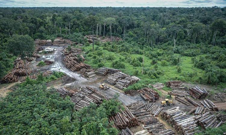 Brazil kêu gọi đầu tư từ quốc tế để ngăn nạn phá rừng Amazon