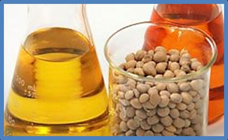 Bỉ cấm sử dụng đậu nành và dầu cọ làm nhiên liệu sinh học