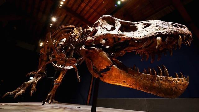 Lực cắn của khủng long bạo chúa đáng sợ như thế nào?