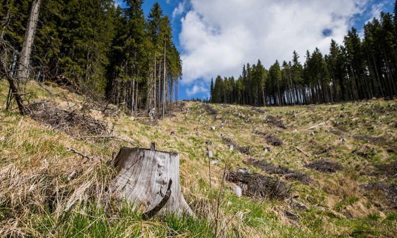 EU đặt mục tiêu trồng 3 tỷ cây xanh vào năm 2030