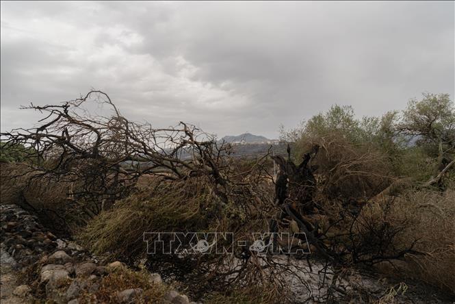 Miền Nam Italy nắng nóng kỷ lục, cháy rừng lan rộng
