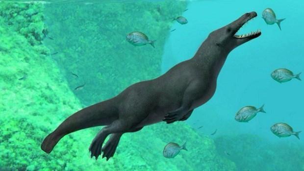 Ai Cập: Phát hiện hóa thạch cá voi có niên đại 43 triệu năm