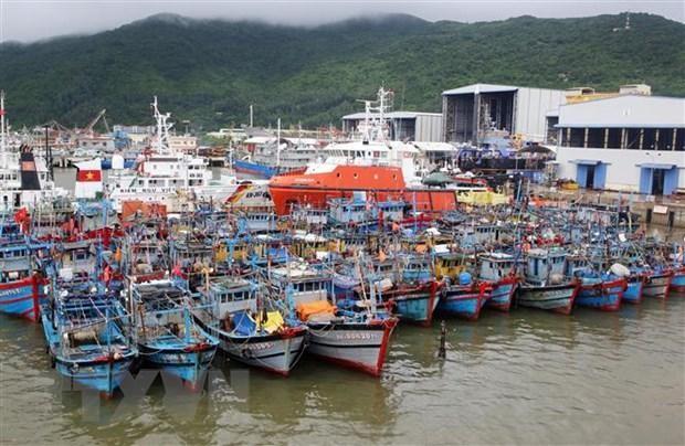 Tàu thuyền của ngư dân miền Trung được neo đậu tránh bão số 6 tại Âu thuyền Thọ Quang. (Ảnh: Trần Lê Lâm/TTXVN)