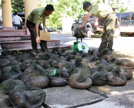 WWF đưa ra cảnh báo khẩn, ngừng phá hủy thiên nhiên để kiềm chế dịch bệnh