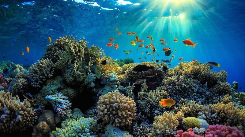 """Dự án """"cấy"""" san hô tại Vườn quốc gia Côn Đảo đã thành công?"""
