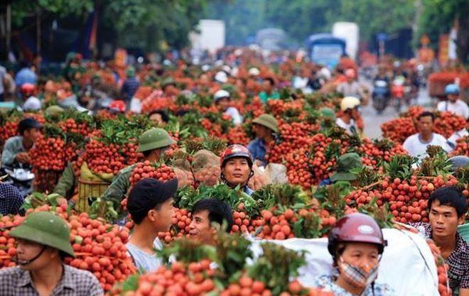 Bắc Giang vừa căng mình chống dịch vừa tìm đường ra cho vạn tấn vải thiều sắp thu hoạch