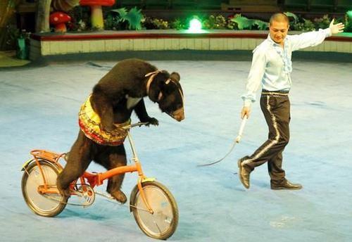 Những cá thể gấu nuôi nhốt để mua vui trong Rạp xiếc T.Ư sẽ được giải thoát