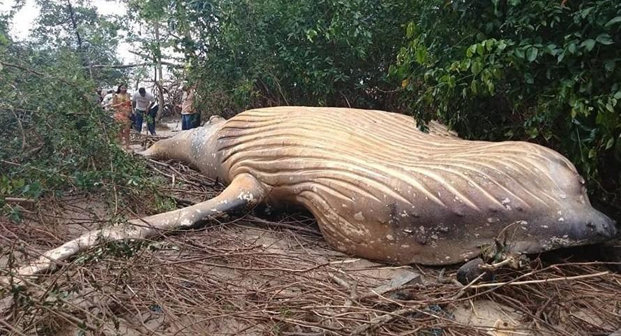 Xác con cá voi được tìm thấy trong khu rừng rậm Brazil. (Ảnh: Instagram)