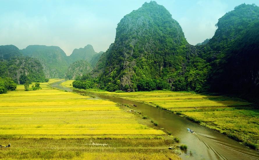 Ngắm mùa vàng Tam Cốc đẹp lung linh giữa trời non nước