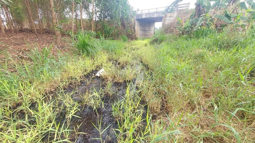 Nước thải từ các trại heo chảy dưới cầu Hưng Nghĩa bốc mùi thôi thối.