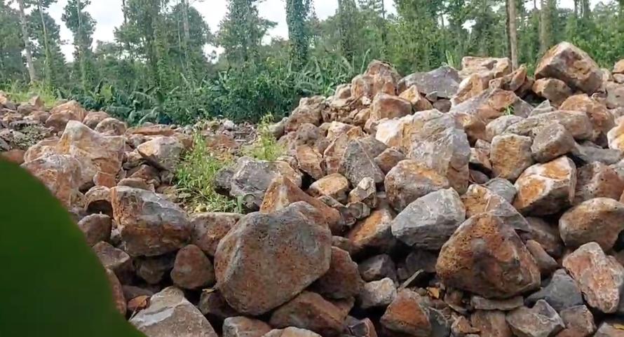 Rừng phòng hộ tại huyện Định Quán đang bị đốn hạ, đào xới tan nát để khai thác đá mồ côi.