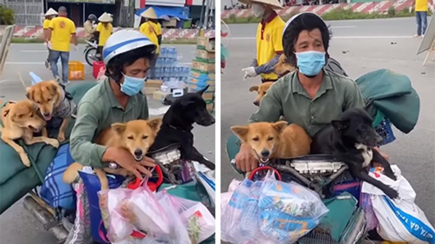 Ông Phạm Hùng Minh và đàn chó.