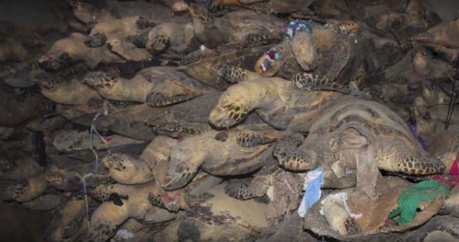 Khánh Hòa: Trả hồ sơ điều tra bổ sung vụ tàng trữ 10 tấn xác rùa biển