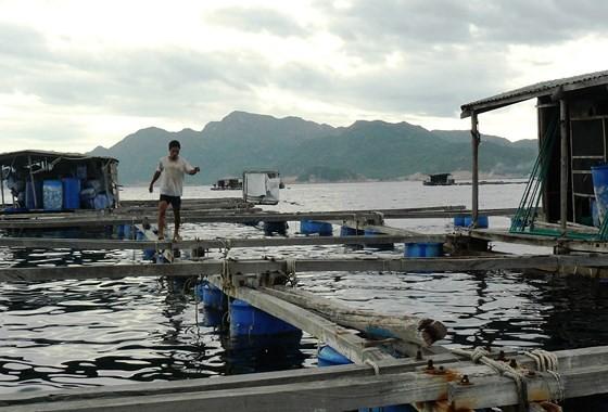 Một bè nuôi tôm hùm trên đảo Bình Ba