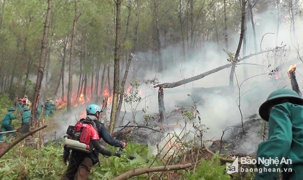 Hơn 3,5 ha rừng thông đang tuổi khai thác nhựa thuộc địa phận xã Công Thành (Yên Thành) bị cháy. Ảnh: Công Thành
